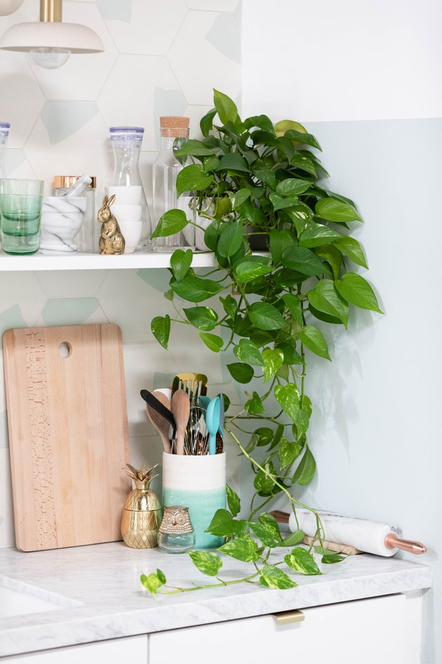 Pothos plant in kitchen