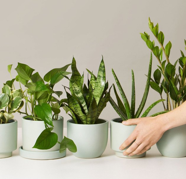 multiple plants in green planters and a hand reaching out