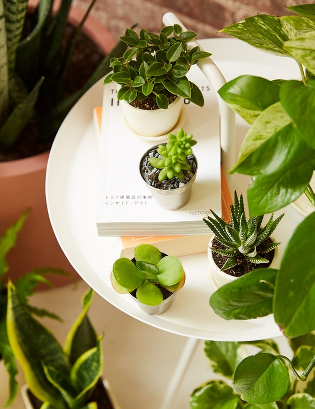 Plants,The Sill