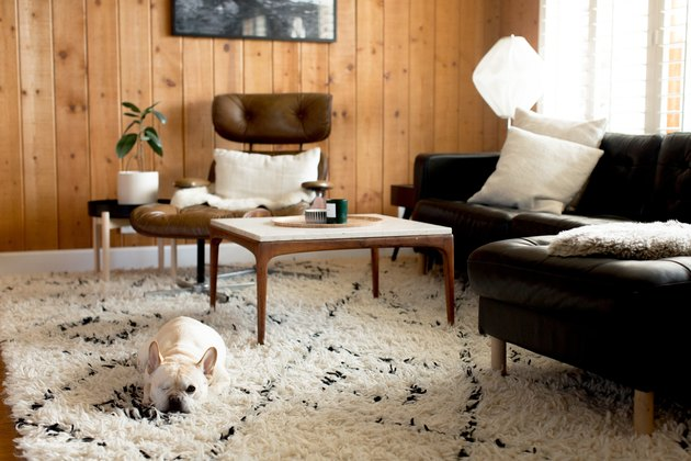 Dog lying down on fuzzy rug in living room