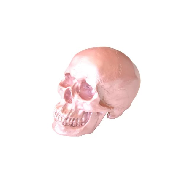 Near and Deer Faux Human Skull