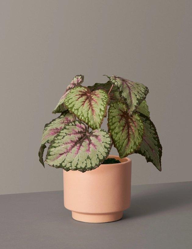 faux plant in peach planter