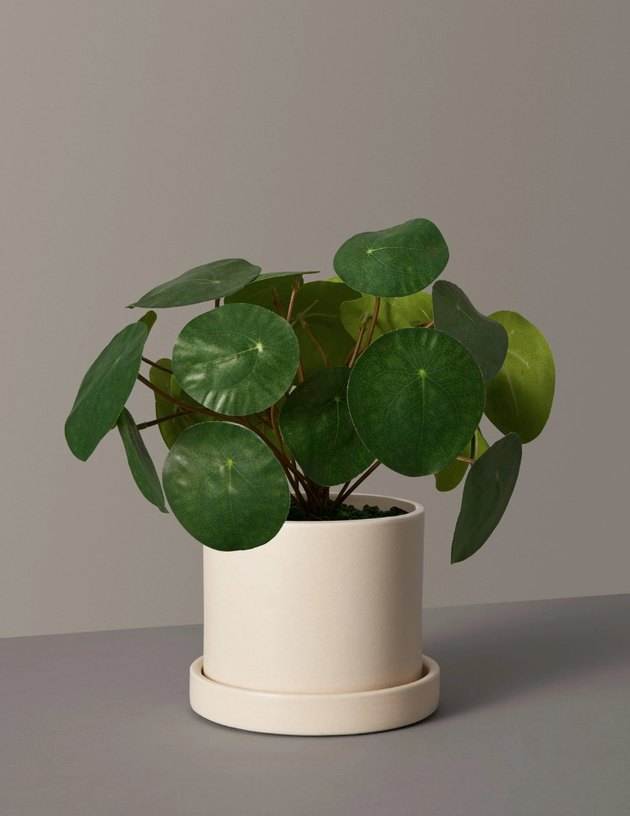 faux plant in off-white planter