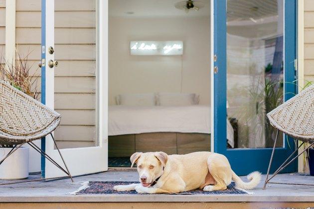 Dog on patio next to open doors into bedroom