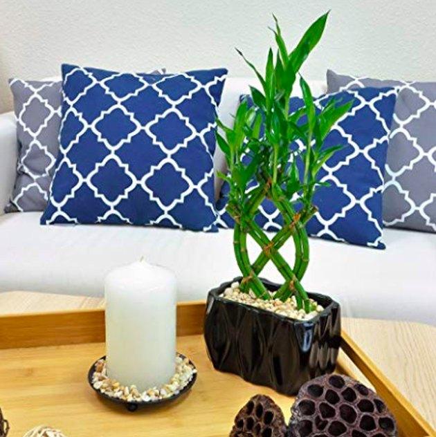 bamboo plant on wooden tray near sofa