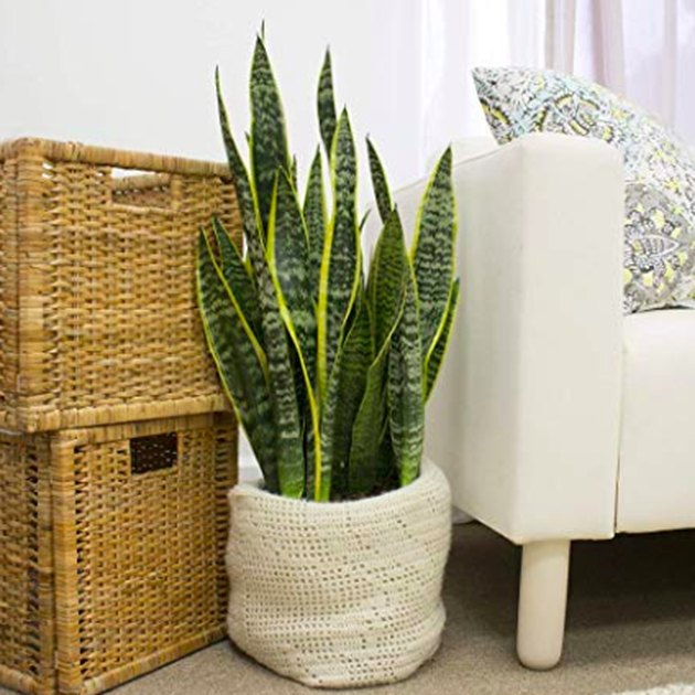 snake floor plant in cloth planter near chair