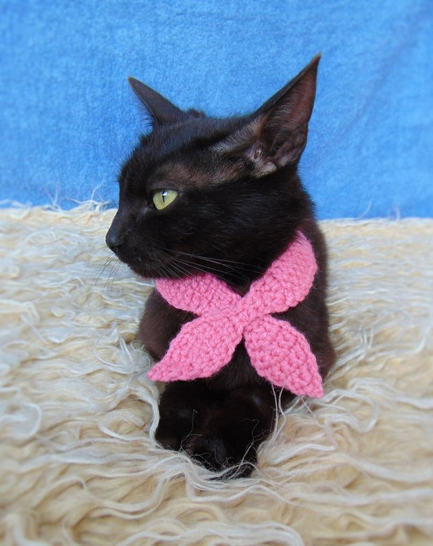 black cat with pink scarf