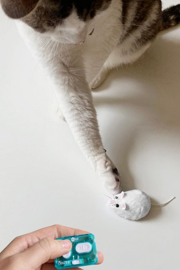 remote control mouse with cat playing nearby