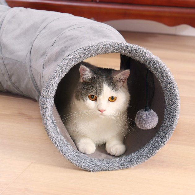 gray cat tunnel with cat inside