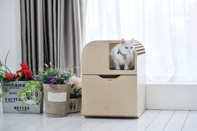 litter box with white cat inside