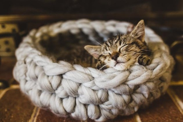 crochet cat bed with cat inside
