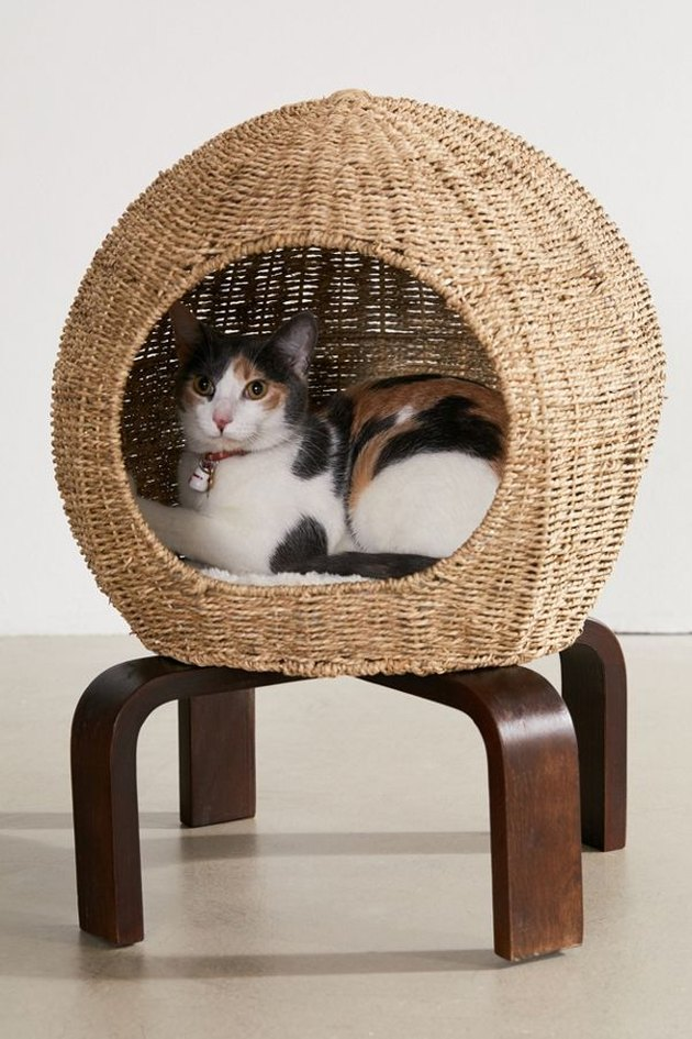 cat pod with cat inside