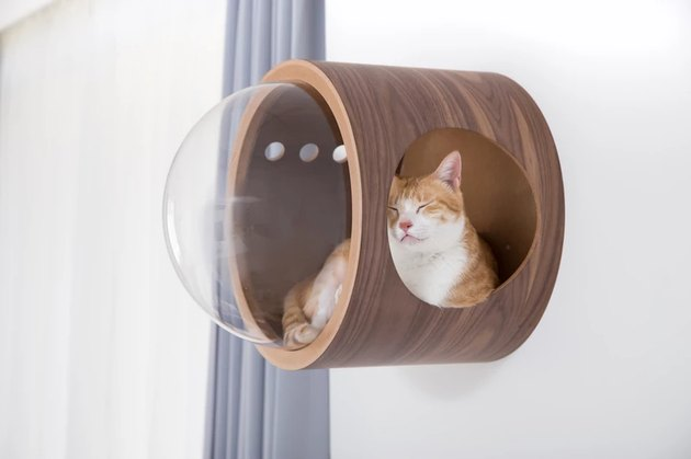 cat inside a wooden pod on the wall