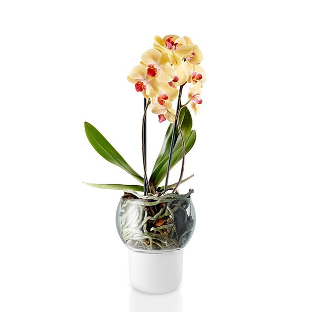 Eva Solo Self-Watering Orchid Pot