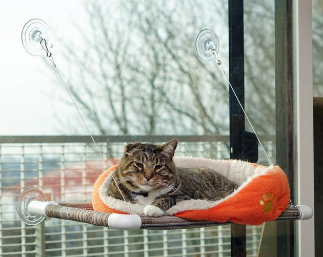 cat sitting on an orange perch attached to window