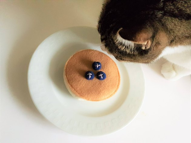 pancake cat toy