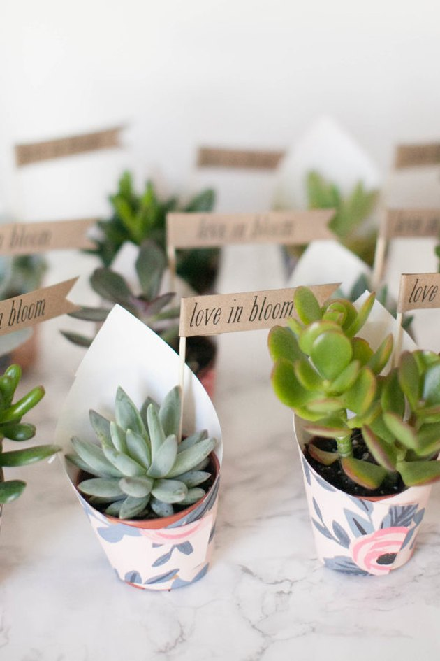 mini succulent party favors