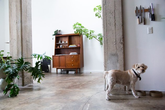 dog at dog bowl in apartment with plants