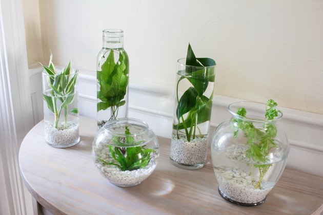 DIY water plants garden