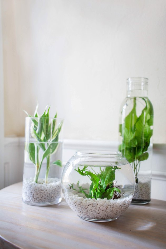 DIY aquatic plants centerpiece
