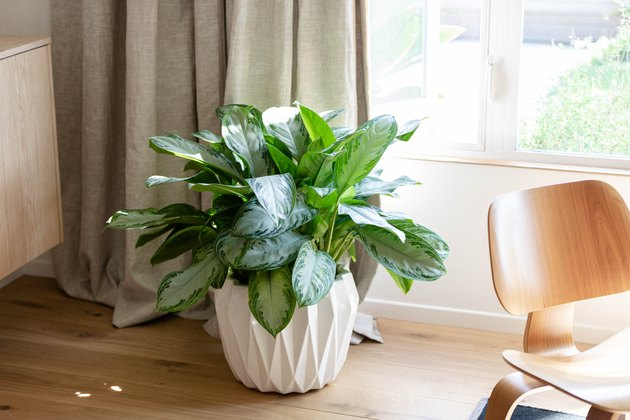 plant in decorative holder and hardwood floors