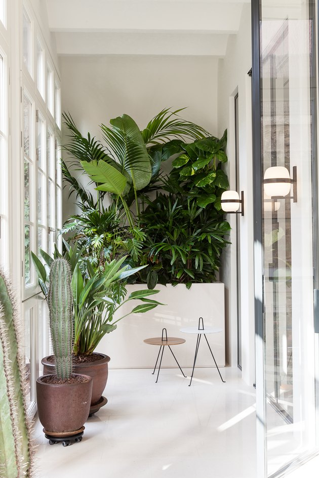 white hallway with plants