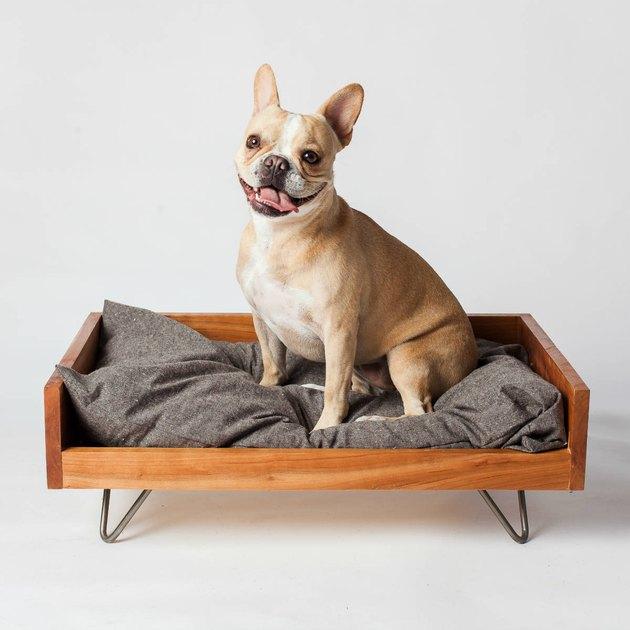 midcentury dog bed