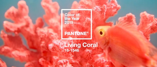 pantone living coral color of the year with coral and fish in the background