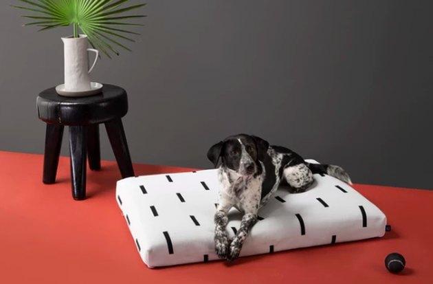 dog sitting on black and white dog bed