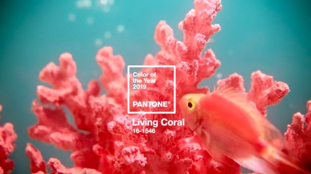 fish and coral with Pantone swatch