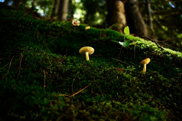 Mushrooms in moss garden.