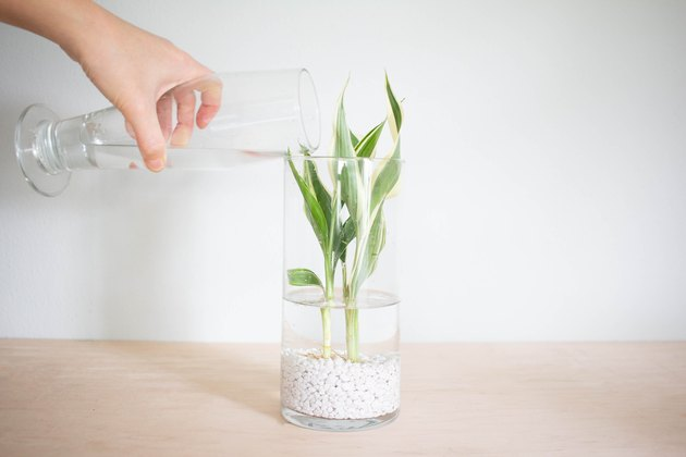 Pouring water into vase
