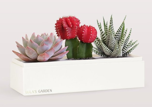 succulent garden in white rectangular pot