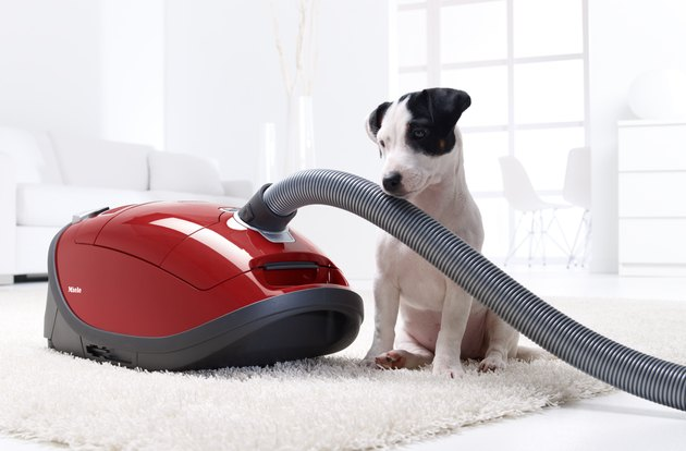 luxury vacuum cleaner in spotless living room