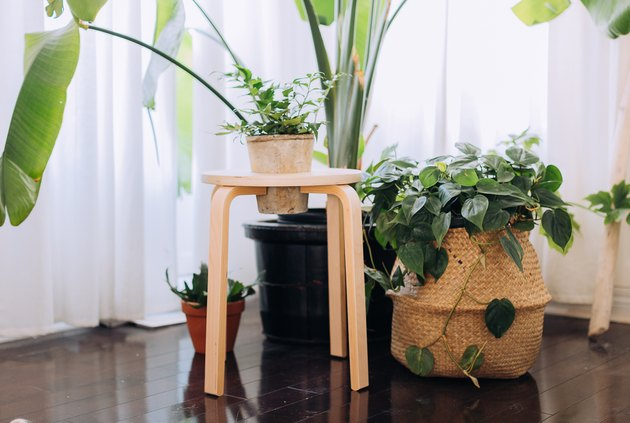 IKEA FROSTA Tabouret Hack Into Plant Stand