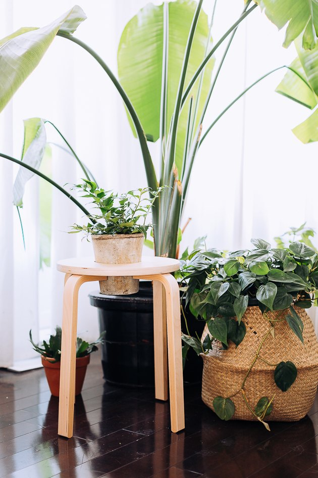 IKEA FROSTA Stool Hack Into Plant Stand