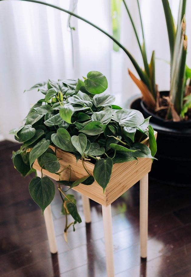 PLANTES VARIÉTÉS IKEA
