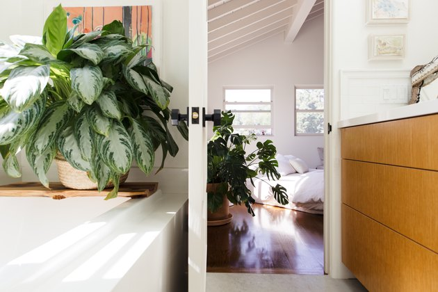 Chinese evergreen plant in bathroom with a plant in bedroom in background