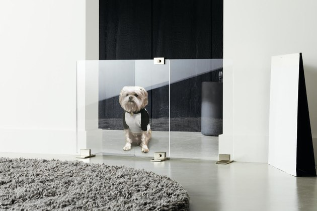 clear acrylic dog door with dog
