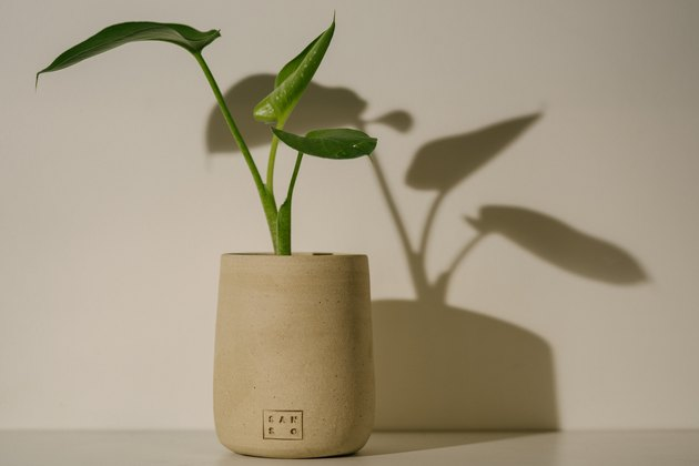 Sanso ceramic with plant