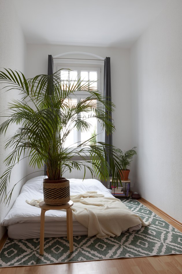 Bedroom with tall plant and patterned rug