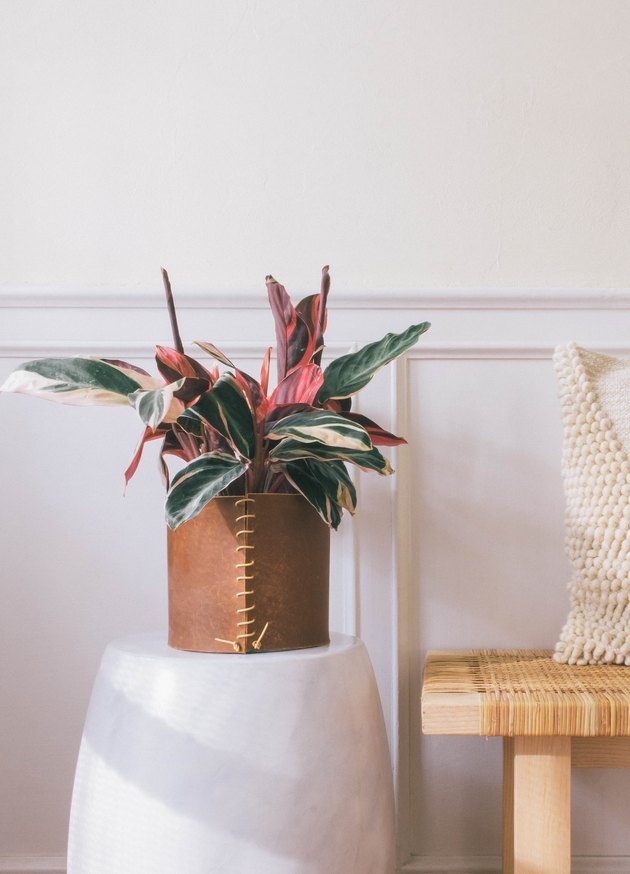 DIY leather wrapped planter with pink and green leaf plant on marble stool next to bench