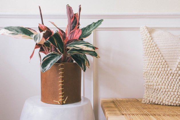 Plant in a leather-wrapped planter near bench