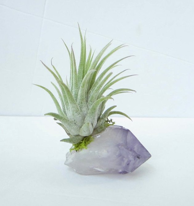 air plant in amethyst crystal