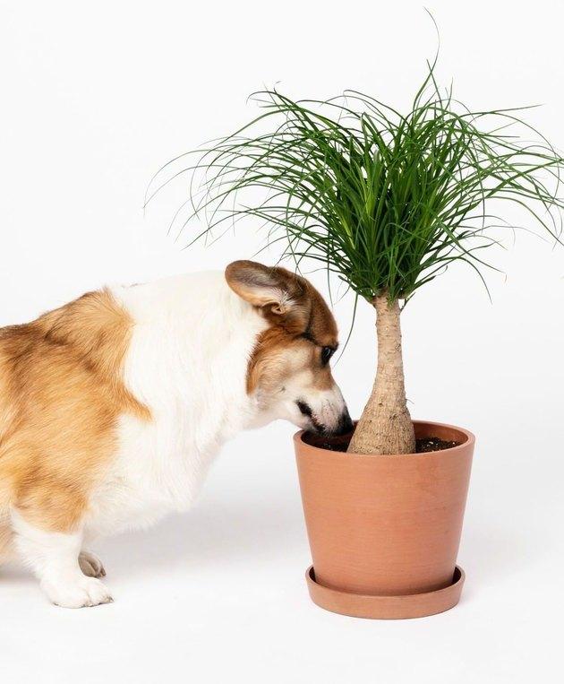 plants for every zodiac