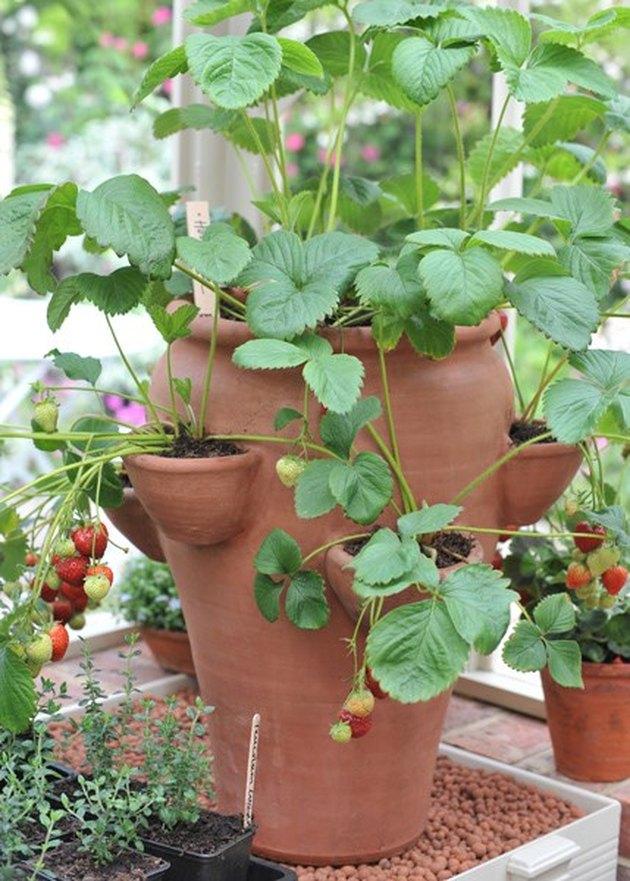 Strawberry pot.