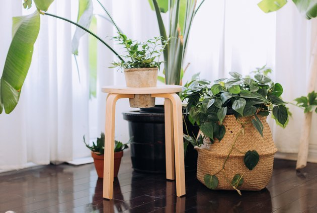 IKEA stool turned into a planter with greenery.