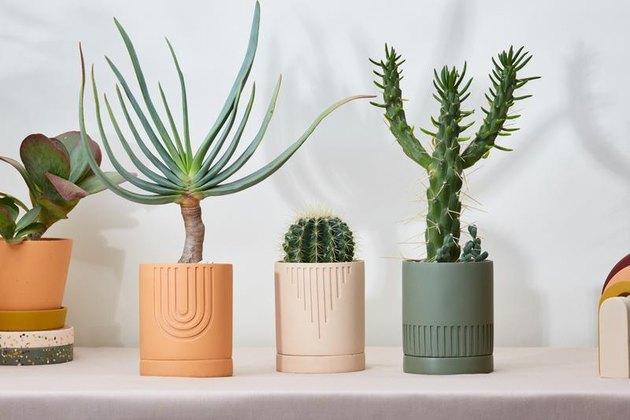 Australian brand Capra Designs resin planters