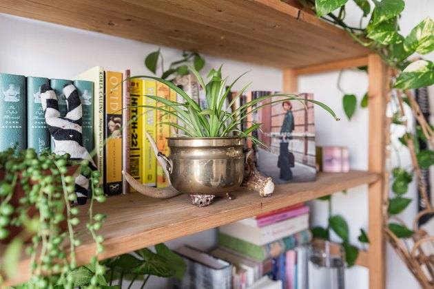 Plants on a bookshelf