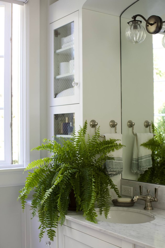 fern in bathroom